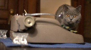 cat with typewriter
